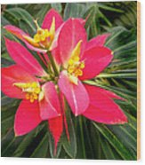 Exotic Red Flower Wood Print