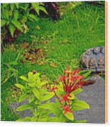 Exploration By A Red Footed Tortoise  Wood Print