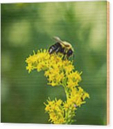 Exploring Goldenrod 2 Wood Print