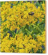 Exploring Goldenrod 5 Wood Print