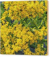 Exploring Goldenrod 6 Wood Print