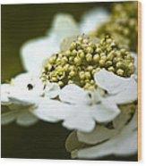 Exploring The Flowers Wood Print