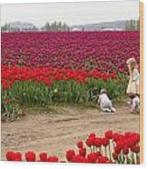 Exploring The Tulip Fields Wood Print