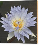 Exquisite Lavender Waterlily Wood Print