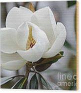 Exquisite Magnolia Wood Print