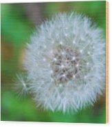 Extra Little Dandelion Wish Wood Print