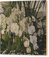 Exuberant Orchid Display Wood Print