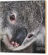 Eye Am Watching You - Koala Wood Print
