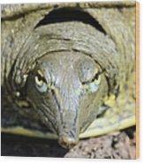 Eye Liner Turtle 8494 Wood Print