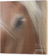 Eye Of A Belgian Horse Wood Print