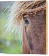 Eye Of A Pony Wood Print