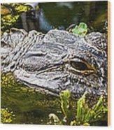 Eye Of The Alligator Wood Print