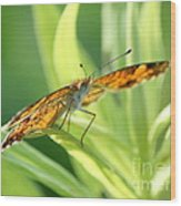 Eye Of The Butterfly Wood Print