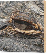 Eye Of The Gator Wood Print
