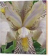 Eye Of The Iris Wood Print