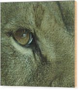 Eye Of The Lion Wood Print