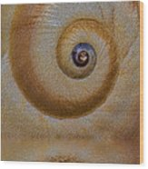 Eye Of The Snail Wood Print by Susan Candelario