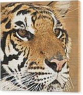 Eye Of The Tiger. Wood Print