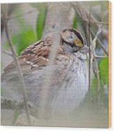 Eye On The Sparrow Wood Print