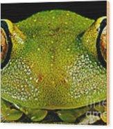 Eye-ringed Bushfrog Wood Print