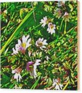 Eyebright On Trout River Trail In Gros Morne Gros Morne National Park-newfoundland  Wood Print