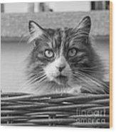 Eyecat Wood Print