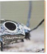 Eyed Click Beetle Wood Print