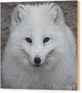 Eyes Of The Arctic Fox Wood Print