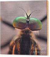 Eyes Of The Robber Fly Wood Print