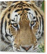 Eyes Of The Tiger Wood Print