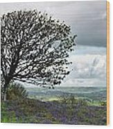 Eype Downs Overlook Wood Print