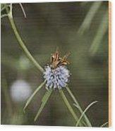 Fa-18ef Super Hornet Moth Wood Print