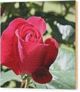 Fabulous Red Rose Wood Print