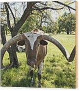 Fabulous Texas Longhorn Wood Print