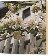 Facades And Fruit Trees Wood Print