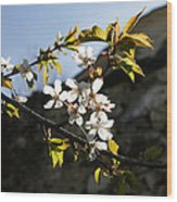 Facades And Fruit Trees - The Church And The Plum Wood Print