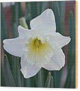 Face Of A Daffodil Wood Print