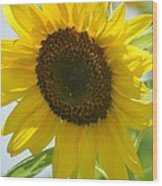 Face To Face With A Sunflower Wood Print
