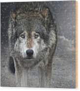 Face To Face With The Wolf Wood Print