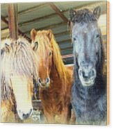 The Furry Trio Facing Me Again  Wood Print