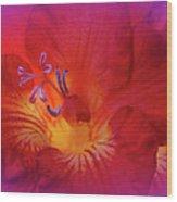 Fade To Freesia - Iridaceae Wood Print