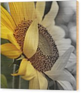 Faded Sunflower Wood Print