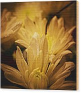 Fading Beauty  Wood Print
