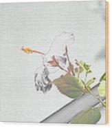 Fading Flower Wood Print