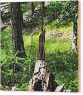 Fairy Dwelling Wood Print