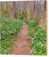 Fairy Paths Wood Print