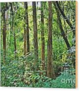 Fairy Trees Wood Print