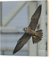 Falcon Flying By Tower Wood Print