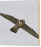 Falcon Glide Wood Print
