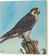 Falcon On Stump Wood Print